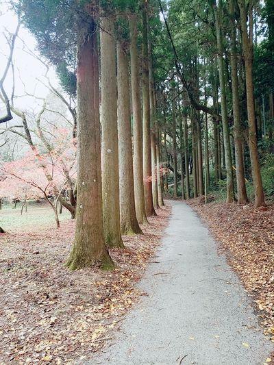 たくさんあるいて散策~😊🍃🍃 ウォーキング 散策 紅葉 休日 お出かけ日和