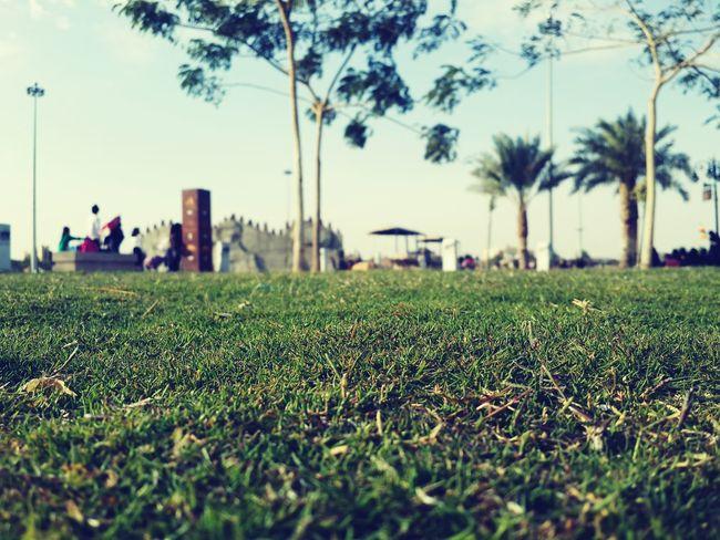 Relaxing Grass Enjoying Life Enjoying The Sun تصويري  عدستي عرب_فوتو EyeEm Best Shots
