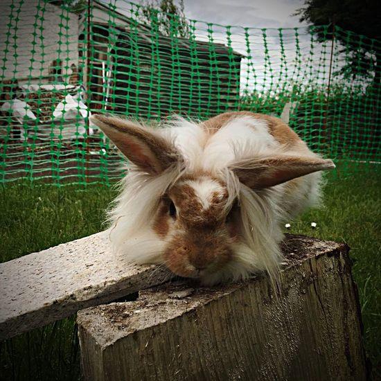 Rabbit Bunny  Fluffybunny Bunny Love Rabbitworld Rabbit Ears Rabbit