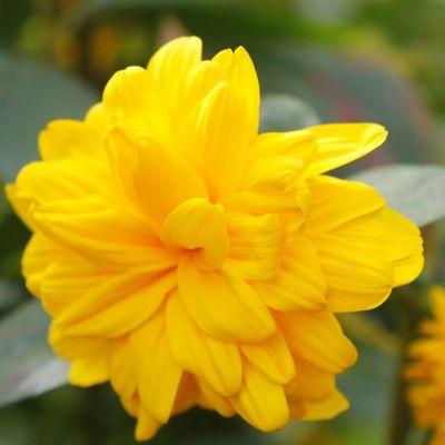 A lovely yellow Igersmcr Wwim10_igersmcr Manchester