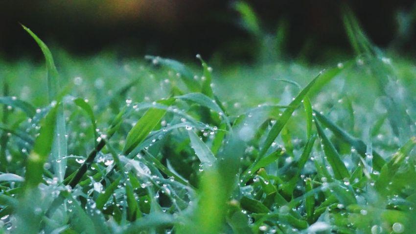 Garden Photography Macro Depth Of Field Bokeh