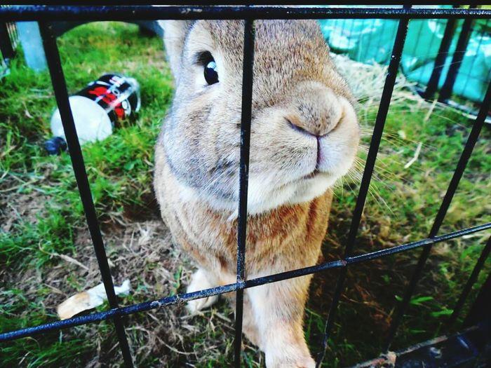 Bob the bunny :) Bunny 🐰 Fluffybunny Bob Animals Bunny Rabbit