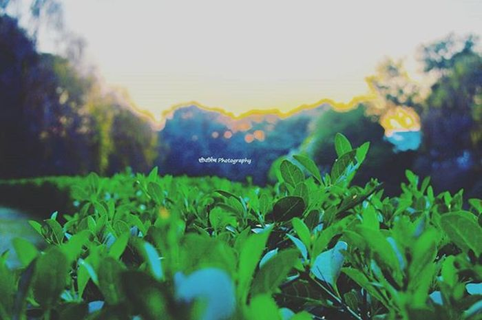 DeepSingh_Photography Green Leafs Photograpghy