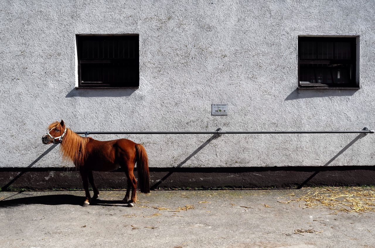 Brown Pony Horse Against Wall