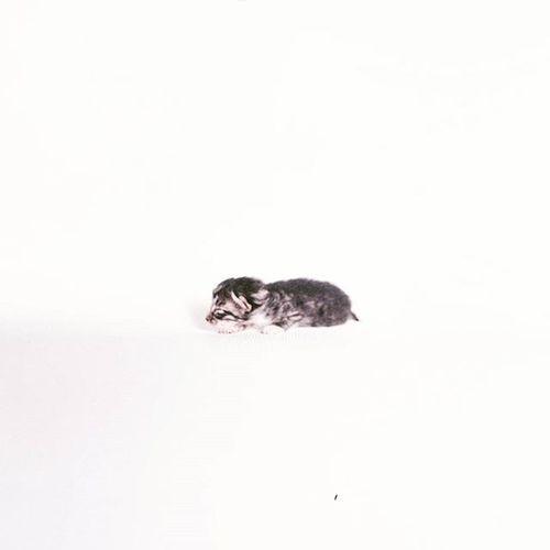 大佬. Fujifilm PRO 400H. 120. Cat Baby Catbaby Kitten Film Fujifilmpro400h Fujifilm Filmphotographer Filmphotography 120Film 120 Meaninglessart Canton 貓 無謂藝術 廣州 菲林 😚