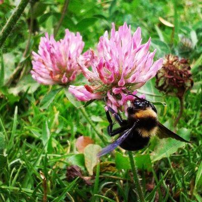 Big Bee! Zzzzzuuum! Roadtrip Facatativa Colombia