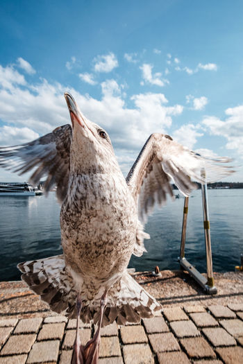 Water Bird Animal Themes Animal Animal Wildlife Animals In The Wild Vertebrate Sky Cloud - Sky Nature One Animal Day Sea Spread Wings Flying No People Beauty In Nature Wood - Material Seagull Wooden Post Norway