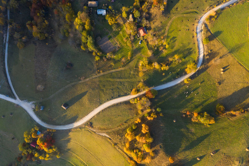 Aerial view of road amidst trees during autumn