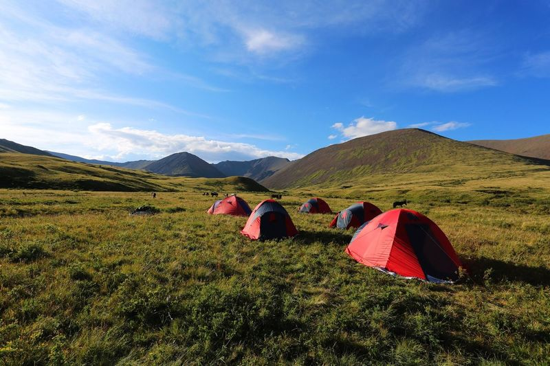 Tents Lined On Meadow And Cattle Grazing On Rural Landscape