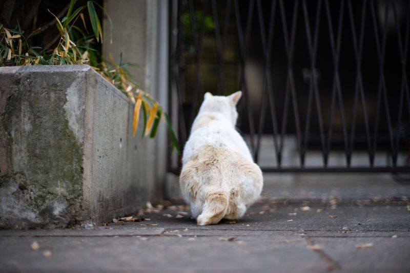 cat Mammal Animal Themes One Animal Domestic Domestic Animals Pets Animal Looking No People Vertebrate Day Sitting Stray Animal Cat Domestic Cat Relaxation Outdoors Wall Feline Nature