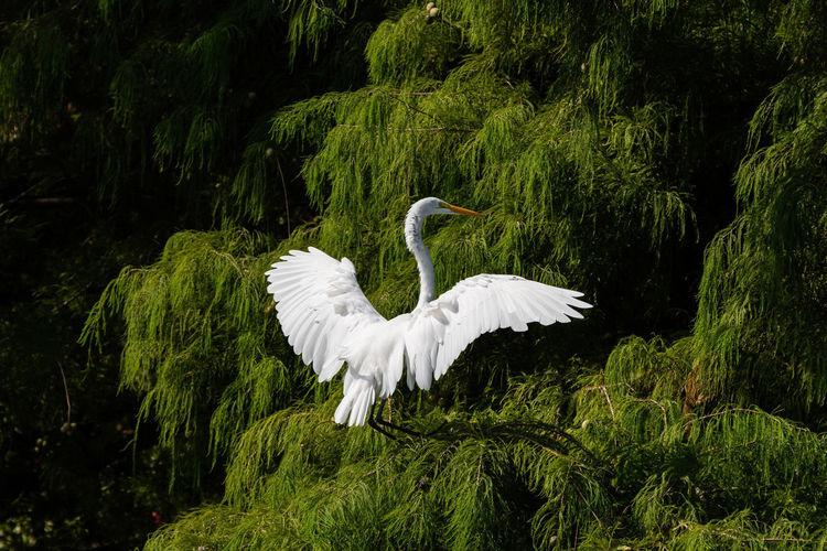 White bird flying over the lake