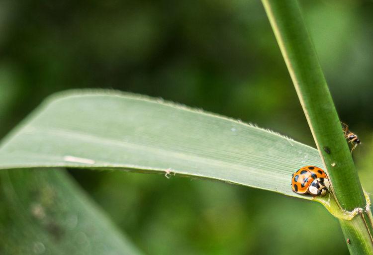 Ant Beauty In