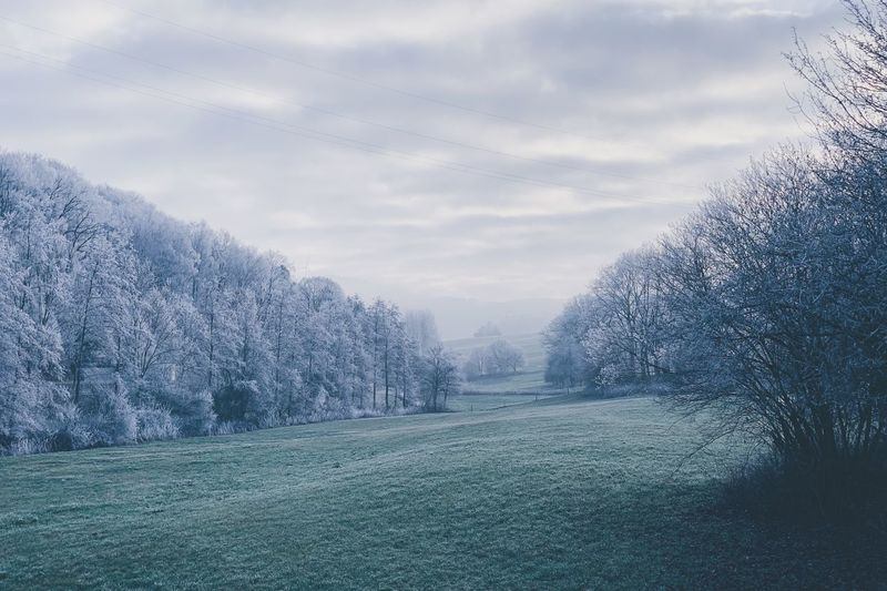 Winter frost Sky Cloud - Sky Nature Tree Plant No People Beauty In Nature Winter Land Snow Cold Temperature Tranquil Scene Scenics - Nature Outdoors Tranquility Field
