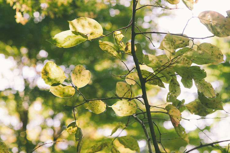 Low angle view of flowers on tree