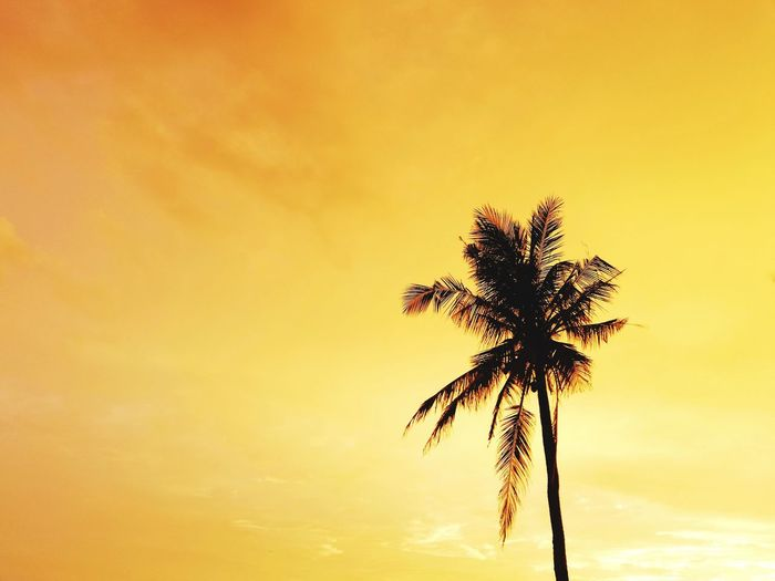 Silhouette of coconut tree Palm Tree Sunset Tree Tree Trunk Silhouette Dramatic Sky Back Lit Sky No People Beauty In Nature Cloud - Sky Nature Sun Tranquility Outdoors Scenics Low Angle View Yellow Copy Space
