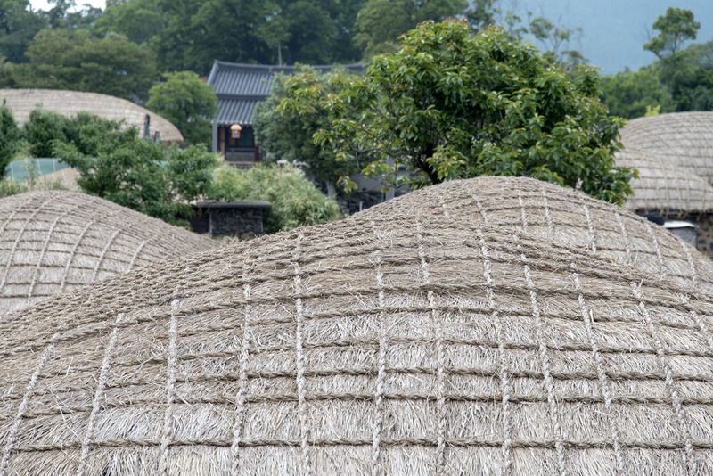 landscape of Seongeup Folk Village in Jeju Island, South Korea JEJU ISLAND  Seongeup Folk Village Agriculture Architecture Building Exterior Day Farm Nature No People Outdoors Rural Scene Stack Tree