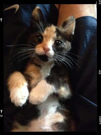 My little sweetheart Kitten Love Cute Pets Sweet Moments My Kitten