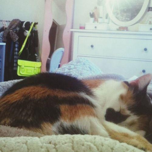 My baby cat Scarlett.. Just i love you. Cat Love Animals
