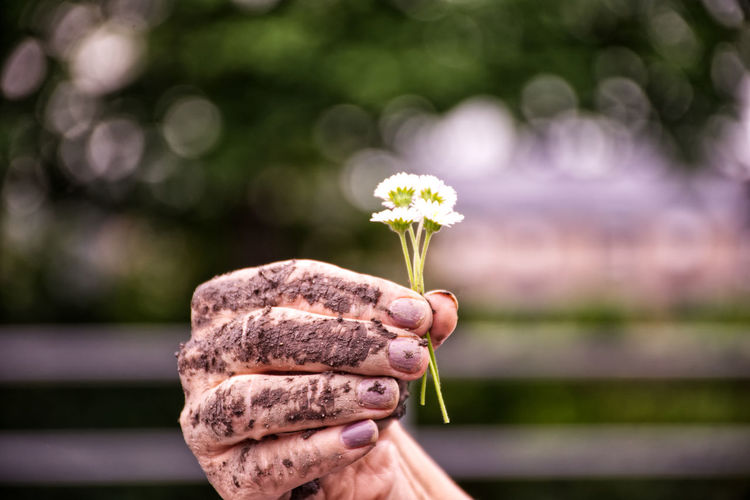 Cropped image of dirty hand holding white flowers
