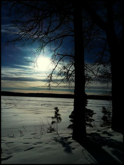 Roy Lake Mn today Water Reflection Nature Sunset Tree Silhouette Sky