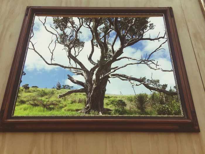 Reality Check Livephotography Frommypointofview Nature Photography Nature On Your Doorstep Framed Plant Indoors  Day Beauty In Nature Wood - Material Window Frame Grass Branch