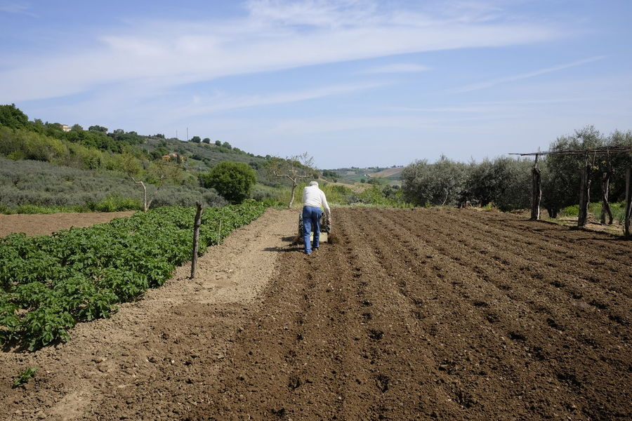Farmer with the hoe Agriculture Beauty In Nature Day Equipment Farm Farmer Field Growth Landscape Men Nature One Person Outdoors People Plough Plowed Field Real People Rear View Rural Scene Senior Men Sky Tractor Tree Working