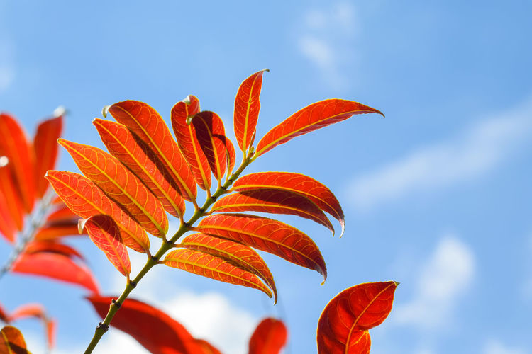 Low angle view of orange plant against sky