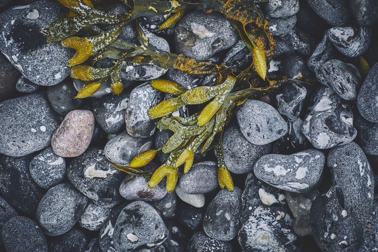On the coast of Rügen, Germany Green Nature Rügen Wallart Backgrounds Bottom Close-up Coast Germany Grey Macro Stones The Still Life Photographer - 2018 EyeEm Awards