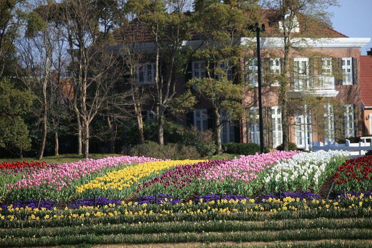 去年のハウステンボス! Taking Photos Enjoying Life Hello World ハウステンボス Spring Flowers Flowers 花 春