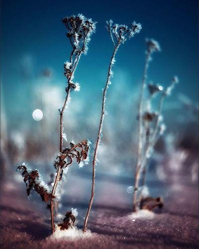 Nature Winter Night Leaf Bokeh OlympusPEN Sonya7 Beautiful Природа зима листья прекрасно Vignette FairyTail Cold холодно макро Macro Macroworld Ночь ночью лунныйсвет Moonlight сказка зимняясказка