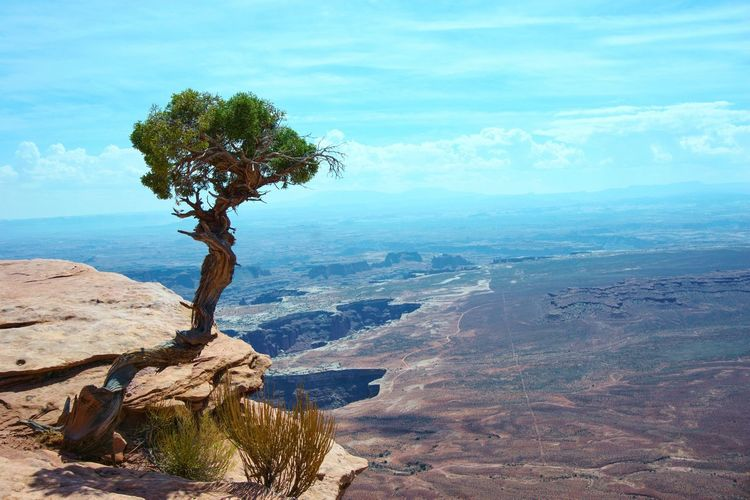 Landscape Tree Scenics Outdoors Nature Tranquility Tranquil Scene Water No People Day Beauty In Nature Sea Sky Desert Desert Beauty Nature Peace in Canyonlands National Park, Utah Perspectives On Nature