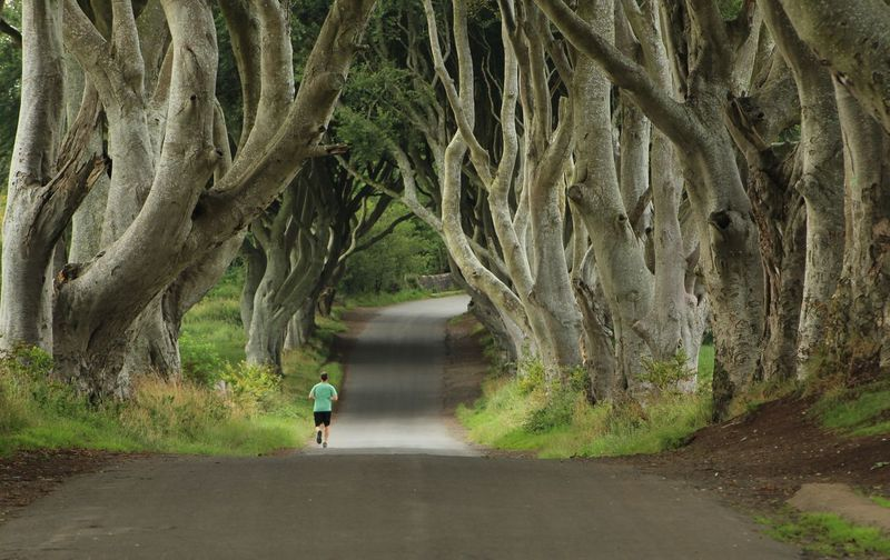 Rear view of man jogging on road amidst trees in forest