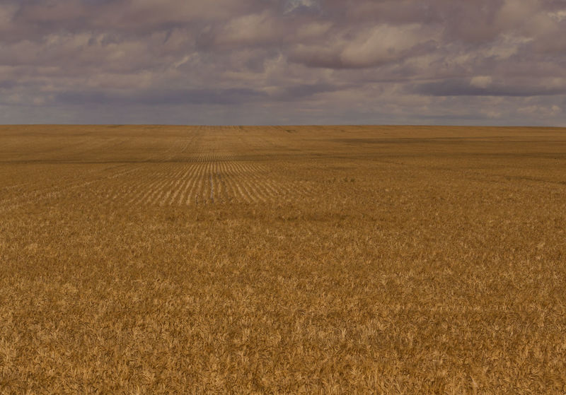 The golden fields of South Australia. This state is chocolate brown and gold. Like a giant candy bar. It is an underrated Australian gem of a plce. Cloudy Farm Rain Storm Wheat Agriculture Cloud - Sky Crop  Day Field Grain Harvest Horizon Over Land Landscape Nature No People Outdoors Rural Scene Scenics Sky