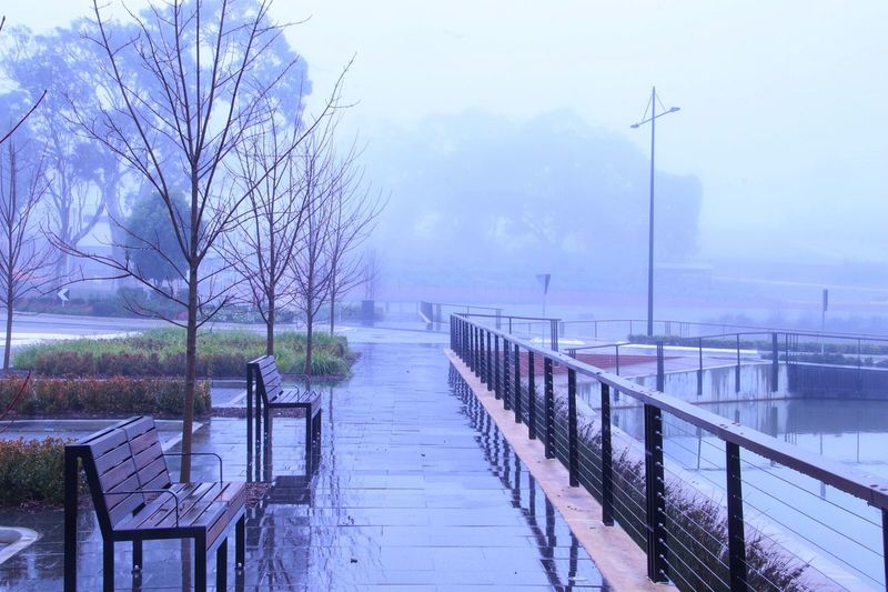 Somewhere to sit Water Nature Tree Winter Plant Cold Temperature Fog Beauty In Nature No People Lake Tranquility Tranquil Scene Scenics - Nature Railing Day Outdoors Rain