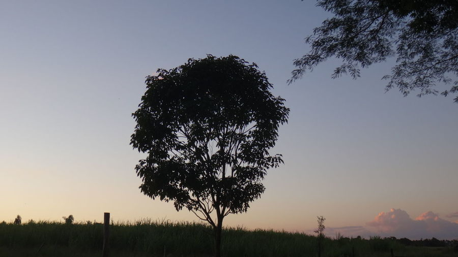 Low angle view of silhouette trees on field against cloudy sky at sunset