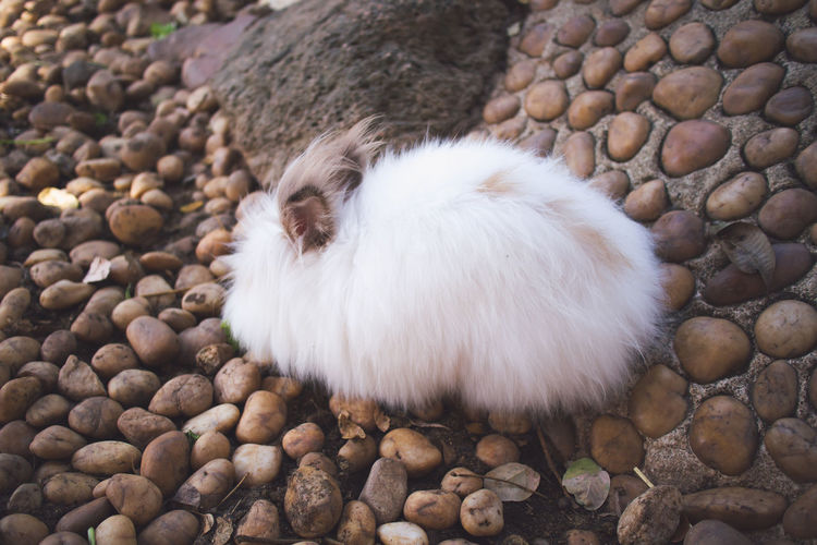 Cute white fluffy bunny