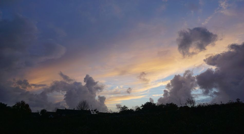 Discard the day Romantic Sky Tree Sunset Silhouette Dramatic Sky Sky Landscape Cloud - Sky Atmospheric Mood Meteorology Romantic Sky