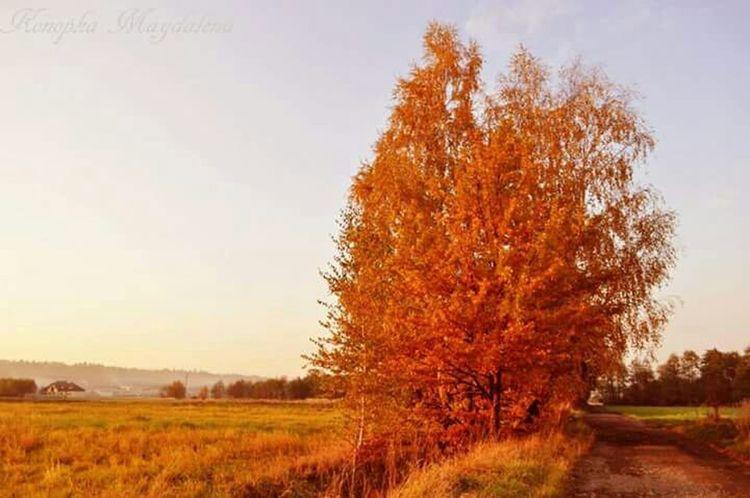 Jesień Nature Orange Przyroda Tree