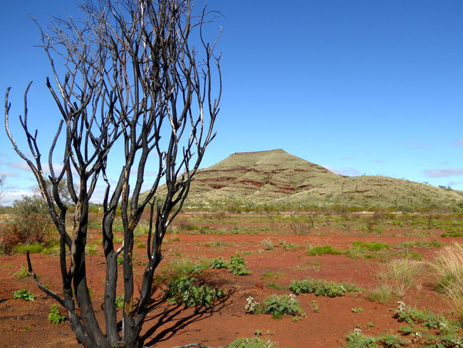 Arid Climate Beauty In Nature Blue Break The Mold Clear Sky Day Desert Iron Ore Country Landscape Mountain Nature No People Outback Australia Outdoors Scenics Sky The Stuff Cars Are Made From! Tranquility Tree