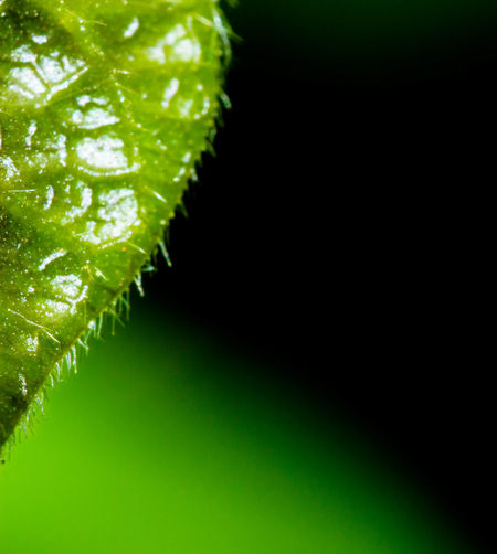 Green Color Close-up Black Background No People Nature Beauty In Nature Outdoors Day Plant Nature Wildlife & Nature Black Background Portrait