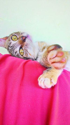 Cat♡ Cat Lovers EyeEm Best Shots Eyeemvision Guimarães Guimarães, Brazil Be. Ready.