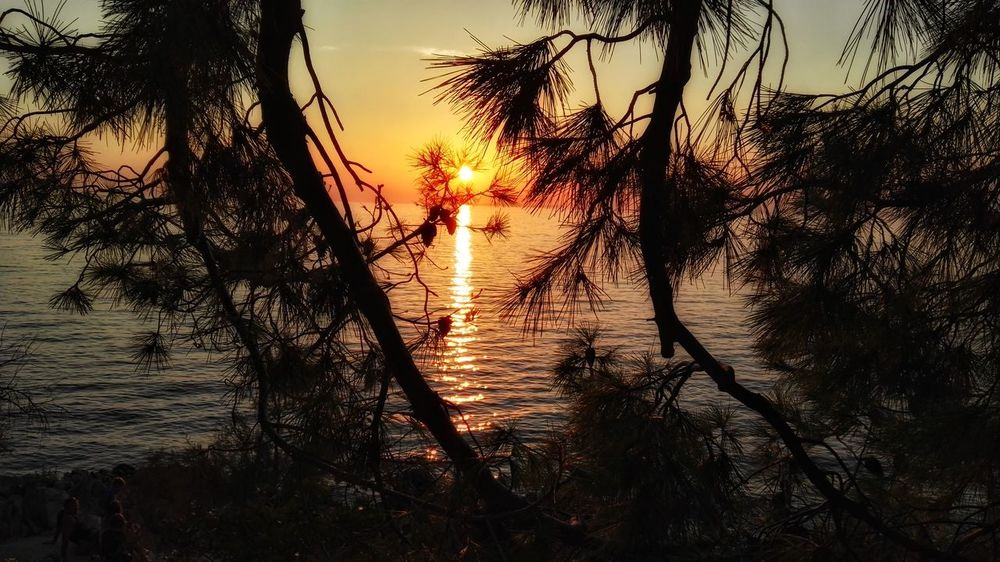Sunset Nature Seascape Branches Beauty In Nature Sea On The Way Adriatic From My Point Of View Eyeem Nature Tree Summer Nature_collection Croatia Holidays In Croatia Primošten Water Sea_collection Croatia 2017 Outdoors From Where I Stand Tranquil Scene Artistic Scenics EyeEm Nature Lover (Primošten, Croatia - August 2017)