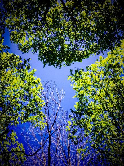 Minotaur in the Sky Minotaur Tree Low Angle View Nature No People Beauty In Nature Sky Blue Green Color Tree Canopy