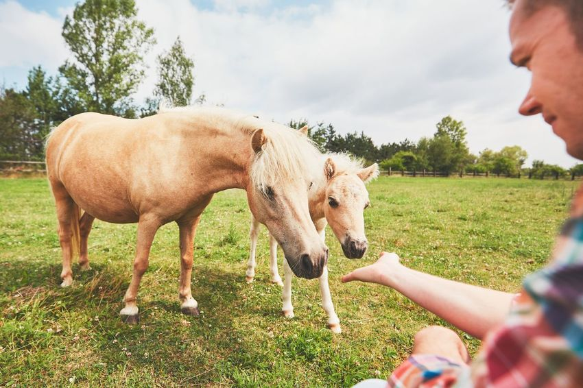 Miniature horses on the pasture. Hand of the farmer caress foal. Care Free Living ❤ Caress Cute Farm Farm Life Farmer Farmland Field Foal Horse Horses Human Hand Livestock Mammal Man Mare Mini Horse Miniature Horse Pasture Pony Ranch Real People Stroking Touch Touching