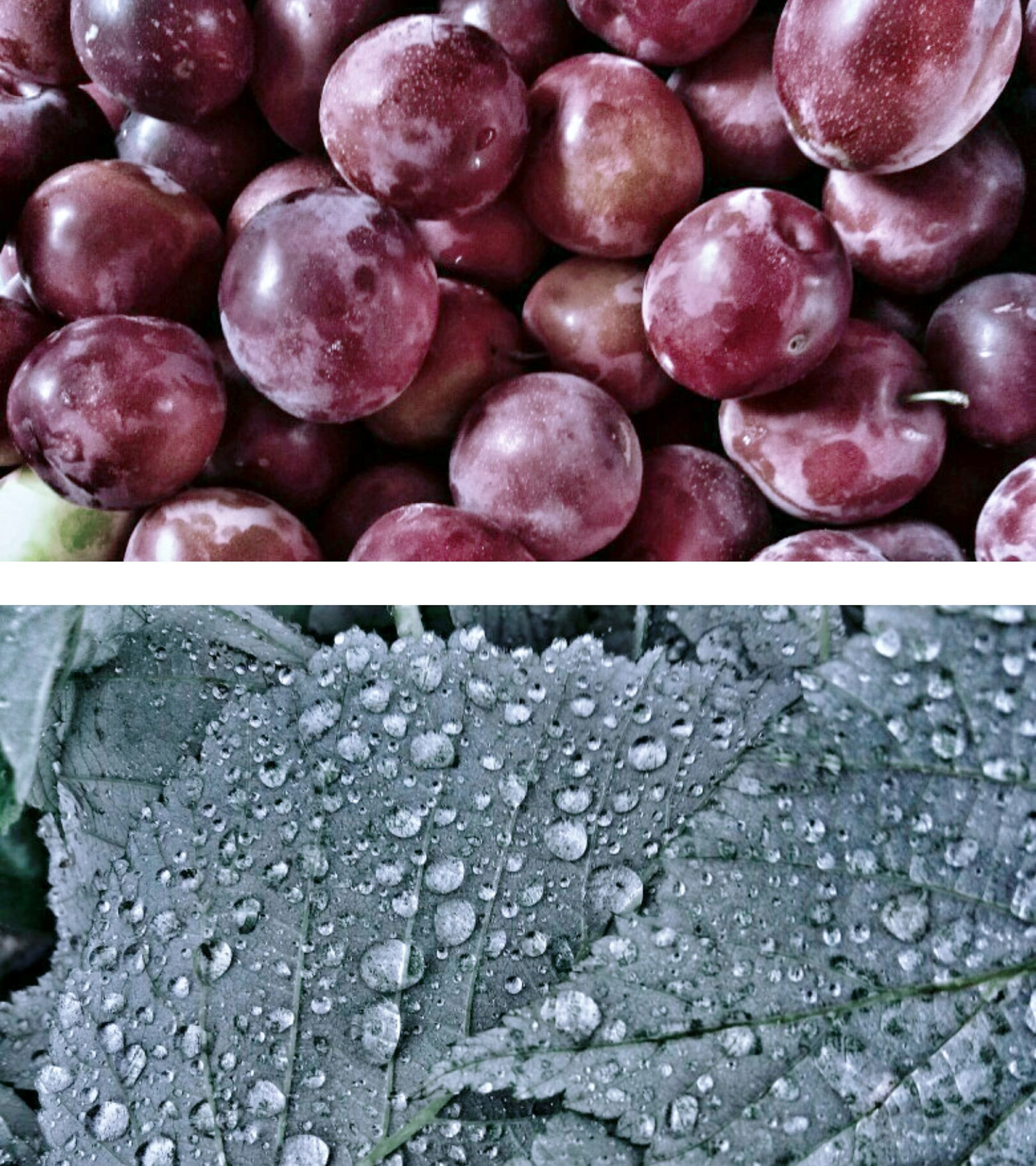 food and drink, freshness, fruit, water, wet, food, no people, outdoors, close-up, healthy eating, nature, day