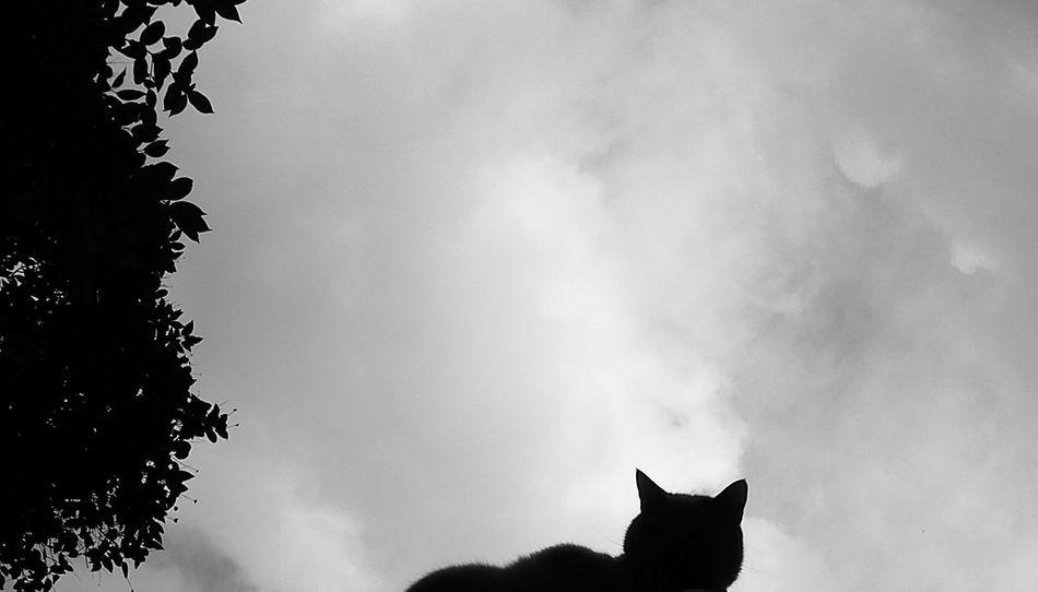 Cat Black & White Silhouette Silueta Street Photography The Storyteller - 2014 Eyeem Awards The Street Photographer - 2014 EyeEm Awards