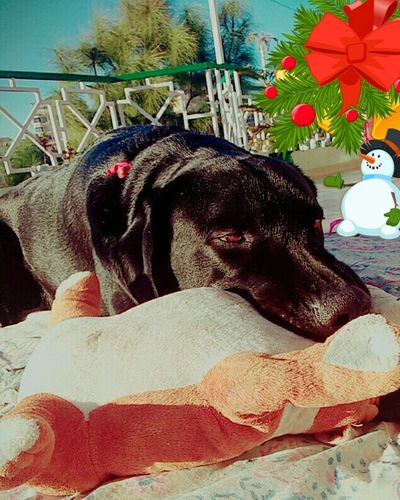 Denzo my baby.... N his lil budFirst Eyeem Photo My Dog Pets Corner Pets Daily Dog❤ Dog Lover Dog Dog Love Dogslife Dogstagram Doglover Dogs Of EyeEm Doggie I Love My Dog Love Dogs EyeEm Animal Lover Wintertime Cold Winter ❄⛄ Winter Is Coming Winter Morning Xoxo💋💋💋