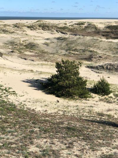 Land Scenics -