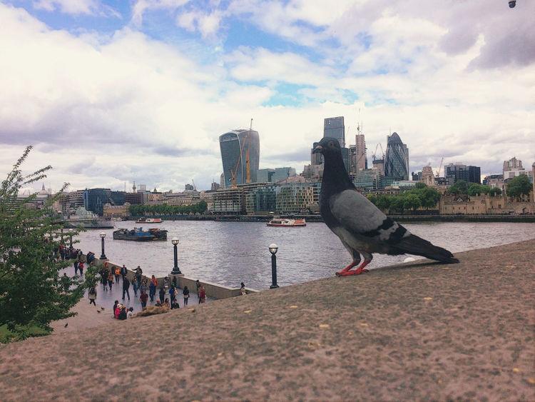 London Pigeon The Street Photographer - 2017 EyeEm Awards The Thames
