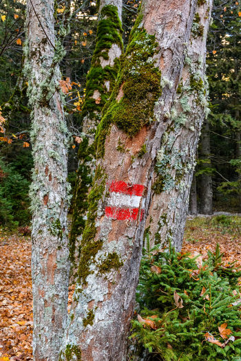 trail mark on a